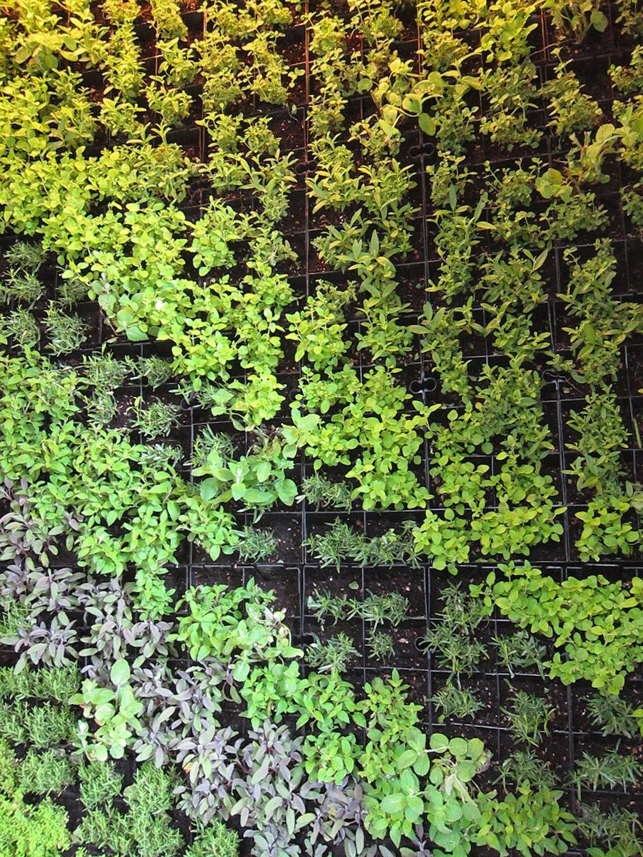 Interior Designs Restaurant Plants